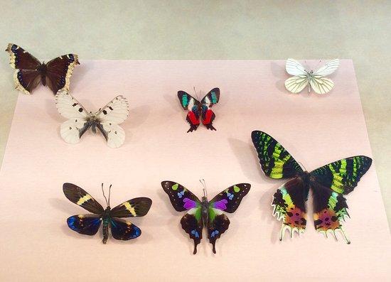 Ottawa Insectarium