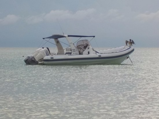 Mawimbi Whale Sharks Tour : look for this boat