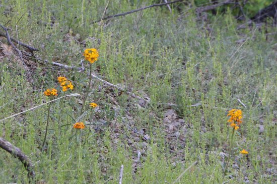 Skyforest, CA: Wallflower