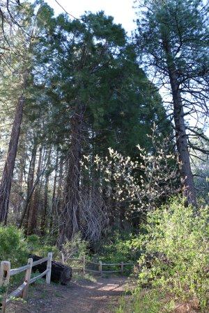 Skyforest, CA: Sequoia Trail