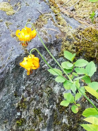 Pemberton, Canada: Trail Wildflowers