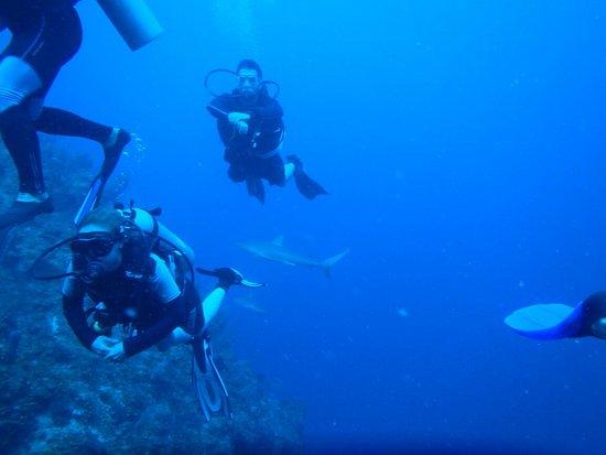 Sonny Dive Shop