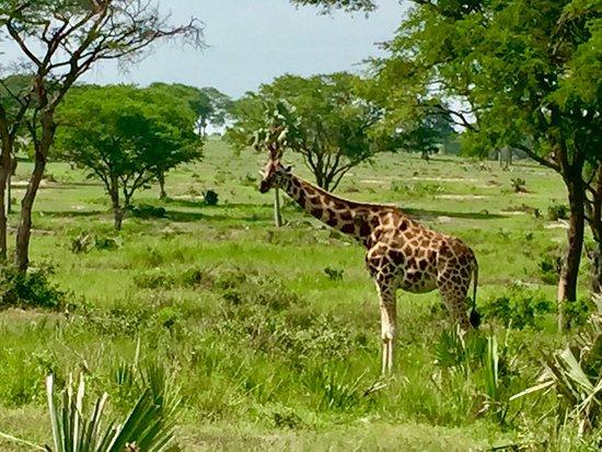 Murchison Falls National Park, Uganda: photo8.jpg
