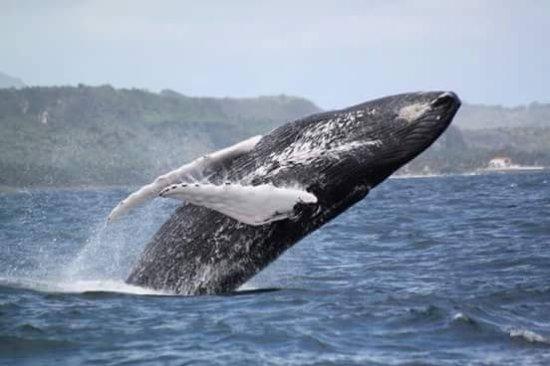 Dominical, Costa Rica: Activities of Ballena Tour C.R