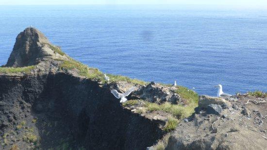 Faial Island, Portugal: Ponta do Capelinhos. Faial. Açores