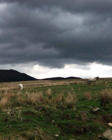 Aberfeldy, UK: Scottish ponies.