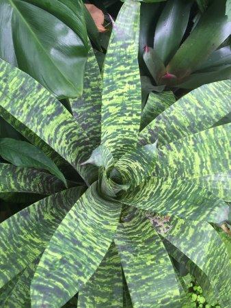 Hunte's Gardens: photo6.jpg