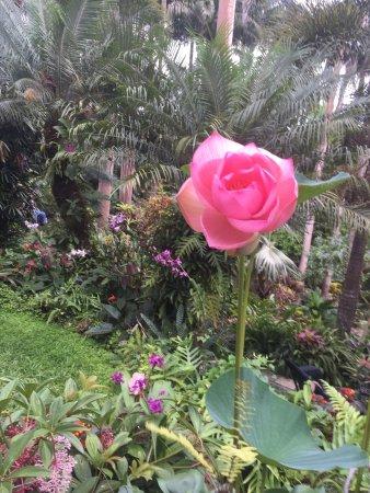 Hunte's Gardens: photo8.jpg