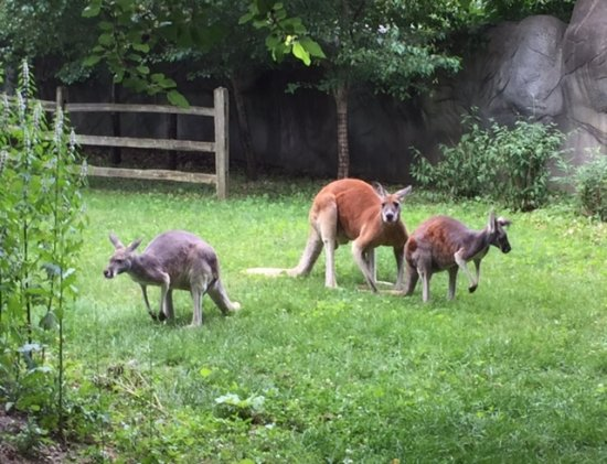Royal Oak, MI: An evening visit to the zoo allowed us to see much more animal activity.