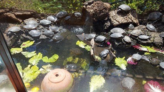 Zafferana Etnea, İtalya: vasca con le tartarughe
