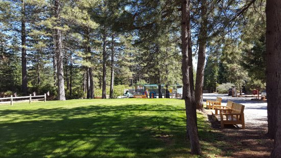 Shingletown, CA: Grassy Area where they had twilight movies for the kids