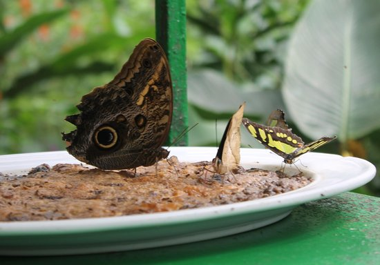 Parque Selvatura: Sharing a Meal
