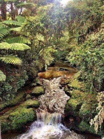Paihia, Nuova Zelanda: Somewhere in between Kaikohe and Kawakawa