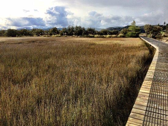 Paihia, Nuova Zelanda: Boardwalk approach into Horeke