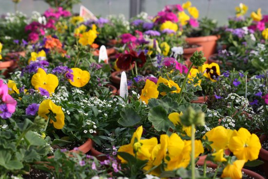 Spring Flowers Picture Of Coveyou Scenic Farm Petoskey Tripadvisor