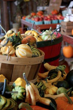 Petoskey, MI: Coveyou Pumpkins and Gourds