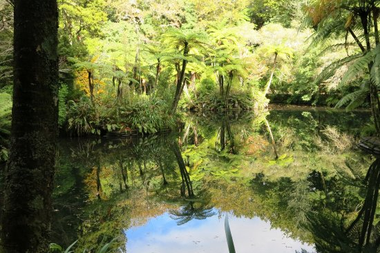 New Plymouth, Nya Zeeland: Mirrored reflection onto Lake