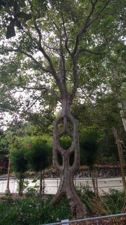 Circus Tree - Gilroy Gardens