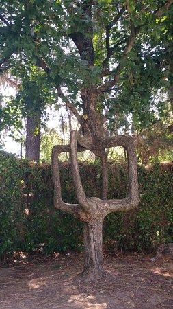 กิลรอย, แคลิฟอร์เนีย: Circus Tree - Gilroy Gardens