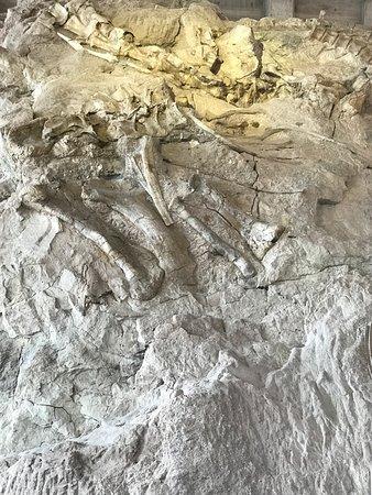Jensen, UT: Dinosaur fossils