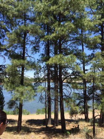 Show Low, AZ: Pine tree