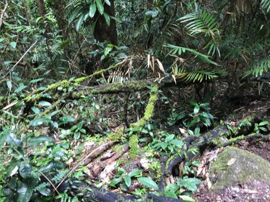 Daintree Region, Australia: photo1.jpg