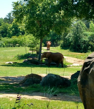 North Carolina Zoo: IMG_20170622_183733_large.jpg
