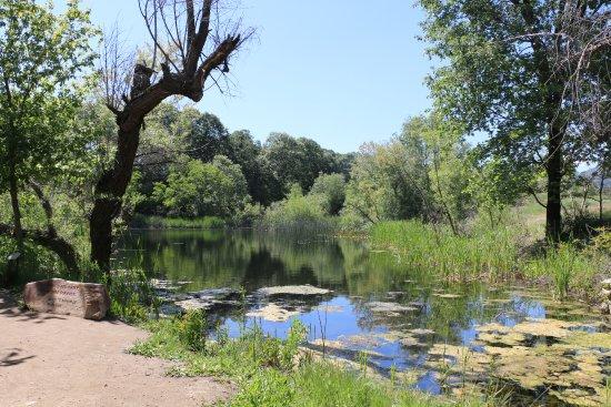 Oak Glen, CA: One of the ponds