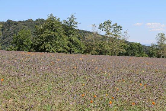 Oak Glen, CA: Wildflowers