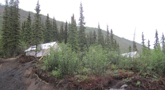 Glacier View, AK: Here are the two tents where we stayed - beds were wonderful!