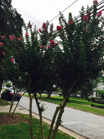 Beaufort, Carolina del Norte: Beautiful tree we saw on the tour