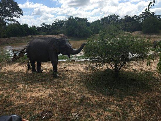 Tissamaharama, Sri Lanka: Elephants up close!