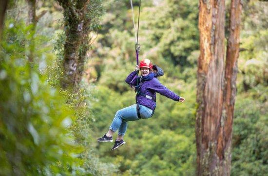 Rotorua Forest Zip Line Canopy...