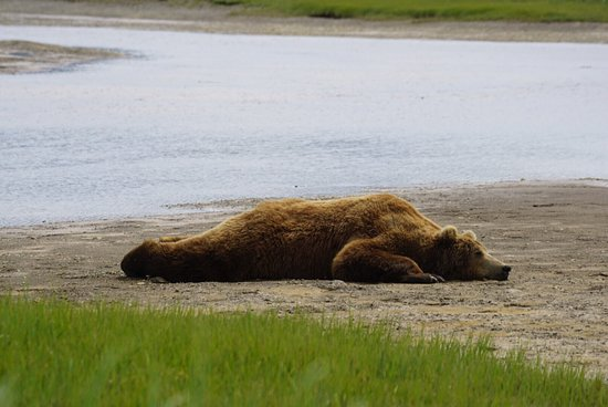 Alaska Bear Adventures: photo0.jpg