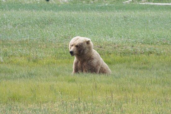 Alaska Bear Adventures: photo1.jpg