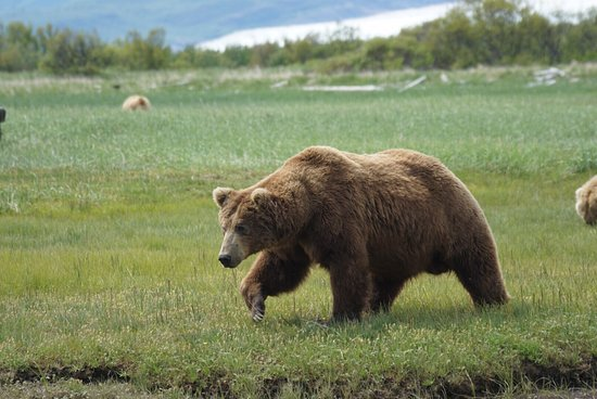 Alaska Bear Adventures: photo2.jpg