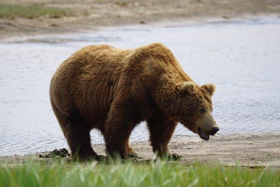 Alaska Bear Adventures: photo3.jpg
