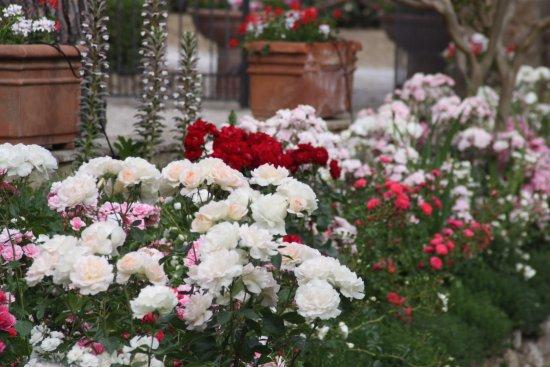 Terre di Nano: Flowers in the garden