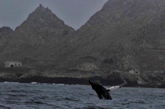 Full-Day Farallon Islands Whale...