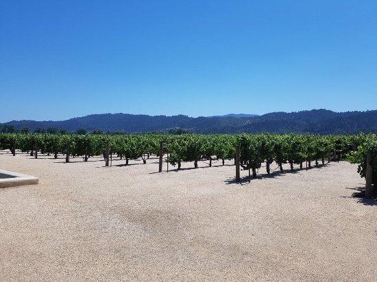 Oakville, CA: photo5.jpg