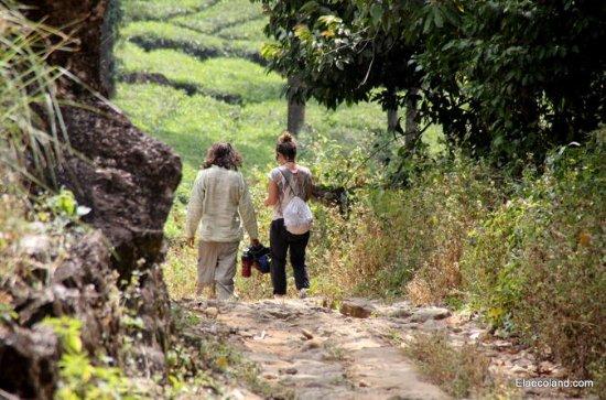 Halv dag Top Valley trek i Munnar