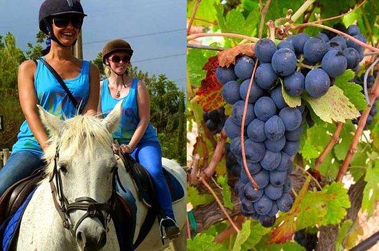 Horseback Riding Tour in a Natural...