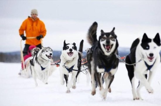 Small-Group Sledding with Huskies from Ushuaia
