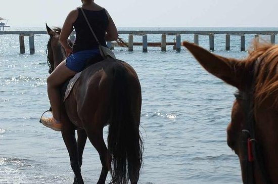 Horseback riding in Bodrum