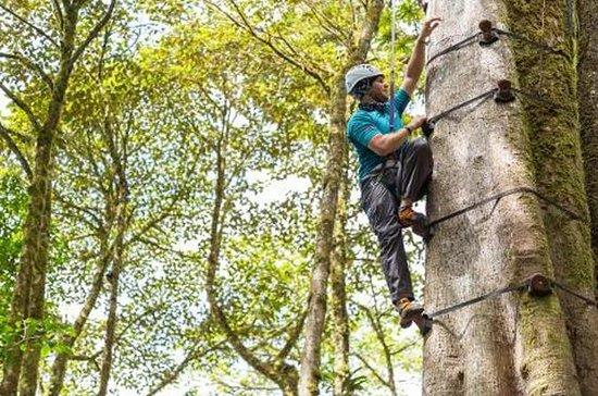 モンテヴェルデの樹木樹木を登る樹木