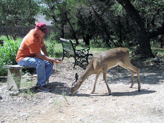 Biscuit Hill Bed & Breakfast Inn: Husband feeding deer