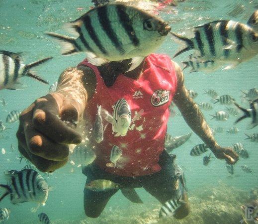 Denarau Island, Fiji: Snorkeling!