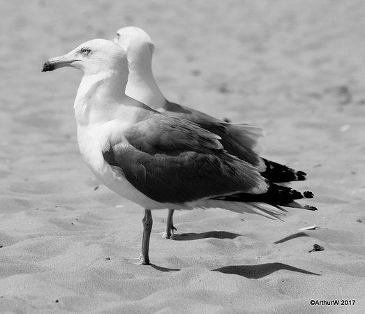 Wijk aan Zee, Países Bajos: lovers?