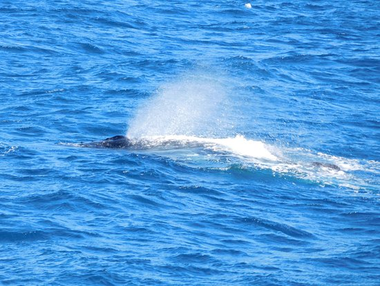 Main Beach, Australien: Whale sighted