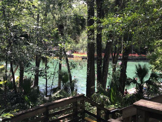 Wekiwa Springs State Park: photo1.jpg